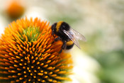 Highland Honey Bees
