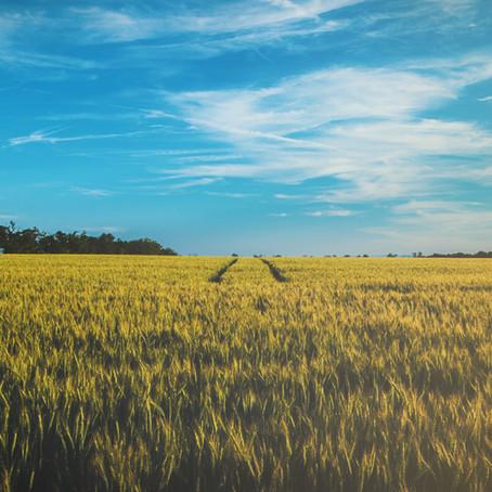 Arrendamento rural: do Estatuto da Terra ao direito do agronegócio