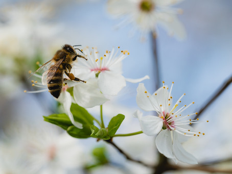 Bees and pollen: what you've always wanted to know
