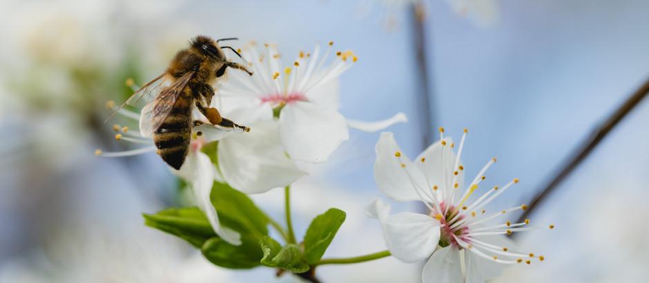 Interesting Honeybee Facts