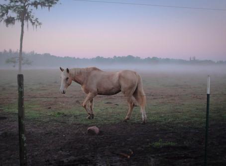Idős lovaknak gyógynövények