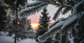 Preventing Winter Damage to Plants