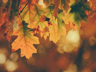Living Seasonally: What to Eat in Fall and Winter