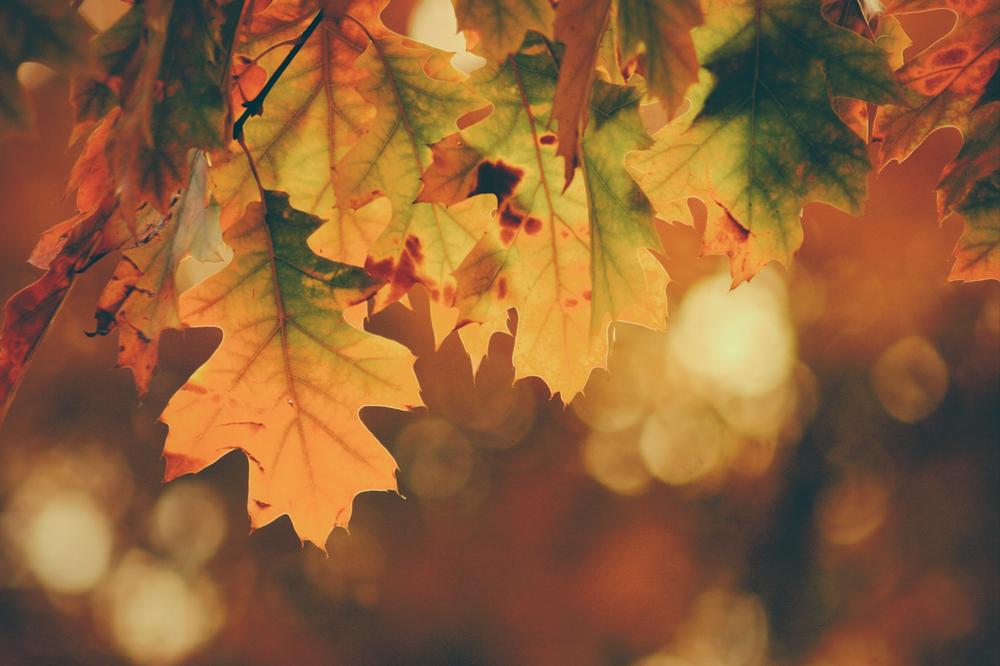 Autumn Time tea