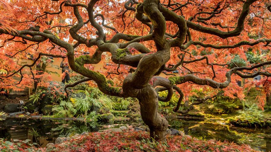 Quel arbre planter dans votre jardin?