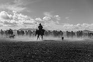 Horse herding cattle