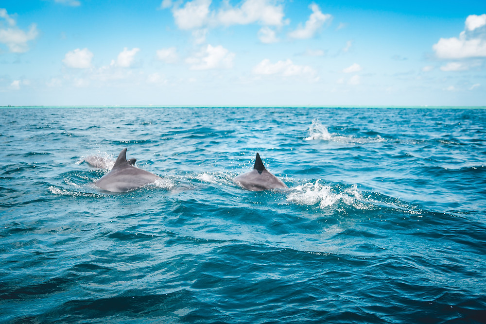 Go dolphin and whale watching in Namibia