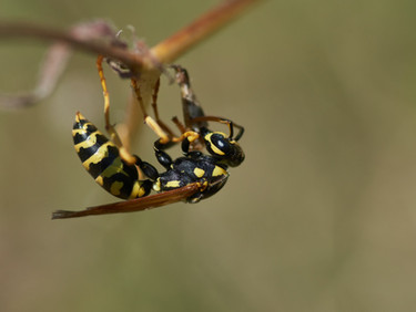 Phoenix Homeowners' Ultimate Wasp Control Guide