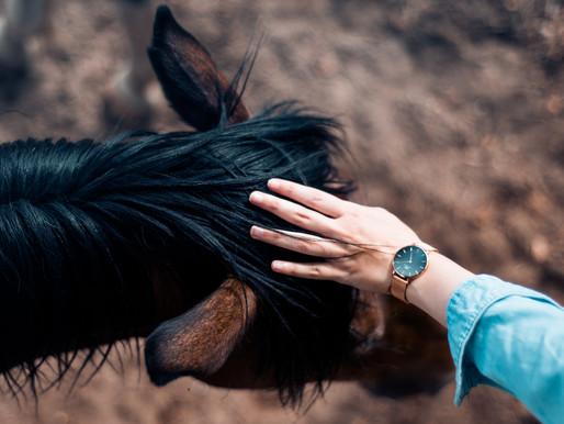 Lataa ilmainen miniopas: Kosketa hevostasi