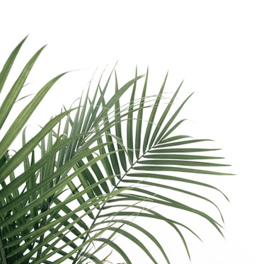 Is Jesus the Savior We Want? (A Reflection on Palm Sunday)