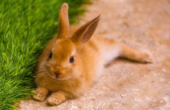Fluffy Bunny Tales
