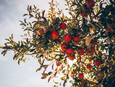 Apples and Humans: A story of Resilience and Growth