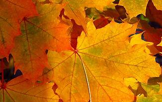 TCM Herbst, Metall Element, Lunge und Dickdarm