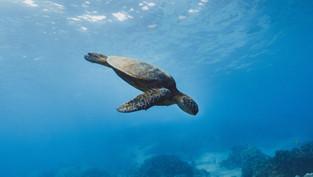 如何選擇合適的自由潛水系統 ? 自由潛水系統懶人包