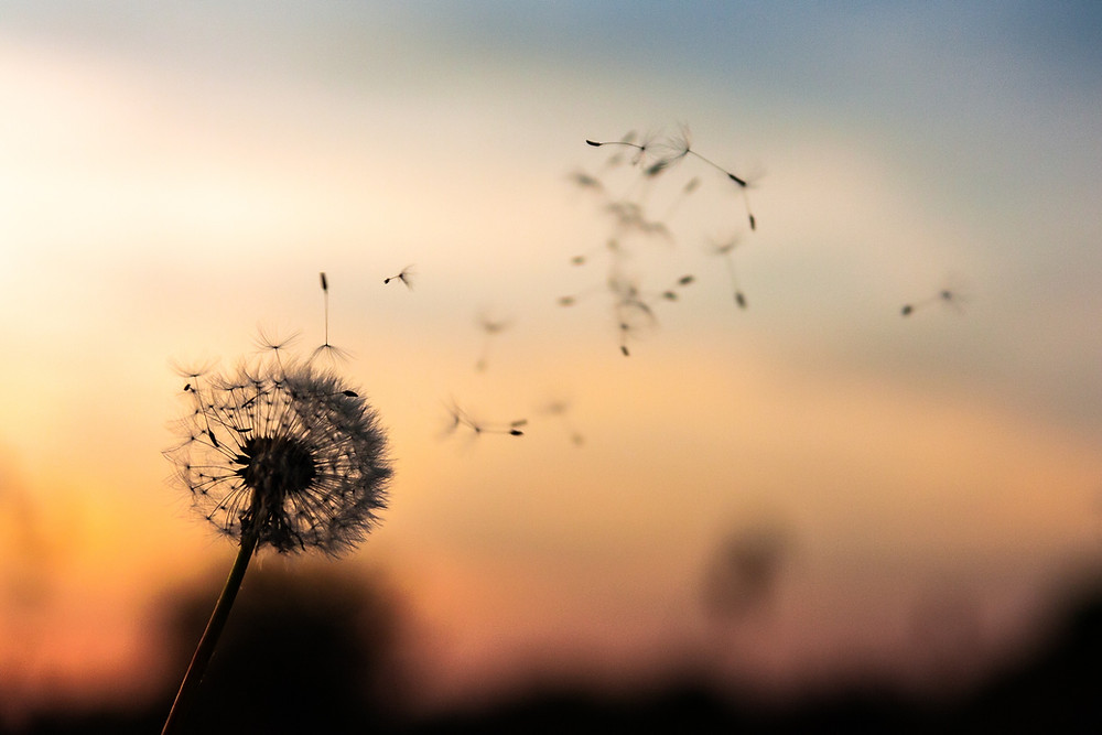Grieving teen blows dandelion, making it fall apart in the breeze in front of a sunset.