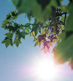 Why Vitamin D Will Change Your Life.