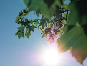 Sonnenlicht-Exposition mildert Krankheitsverläufe bei COVID-19-Infizierten