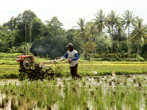 Pacific island farmers lend new voice to worldwide organic farming movement