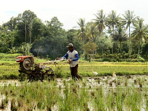 Siaran Pers | Investasi di Sektor Pertanian Perlu Ditingkatkan Untuk Capai Ketahanan Pangan