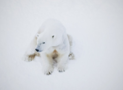 The 'white bear' problem - why you need to know about it for your wellbeing