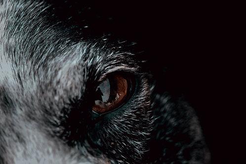 Preconjure - S. the Werewolf