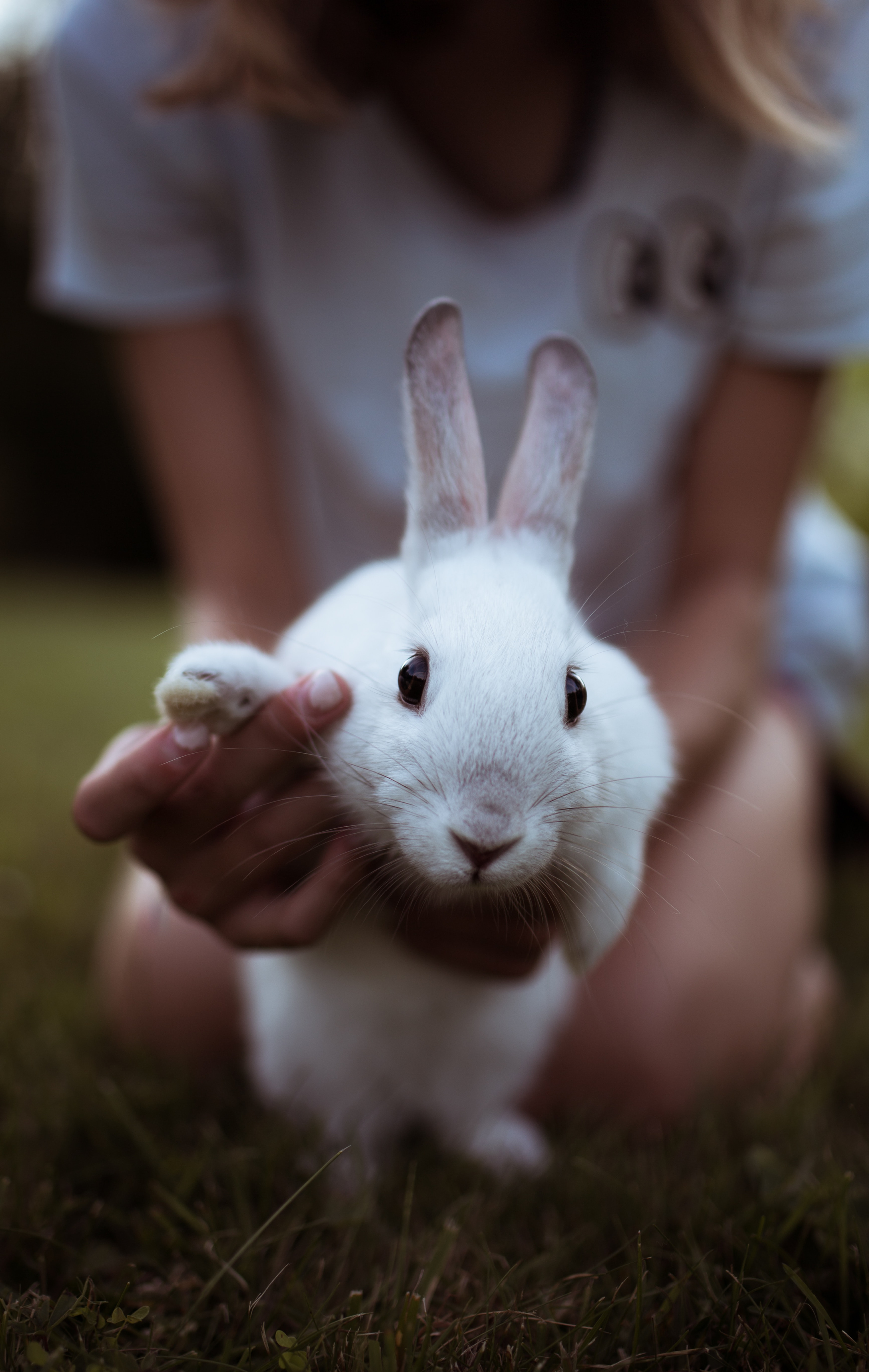 Exotic Pets Nail Triming
