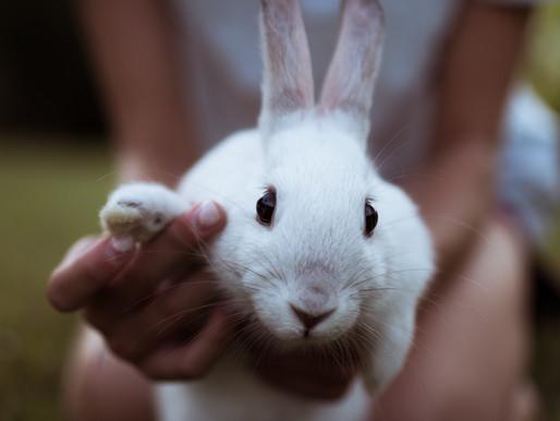 Bunny @ Petspace :)