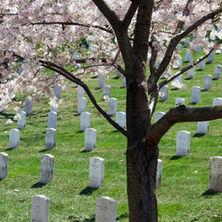 Mock Funerals