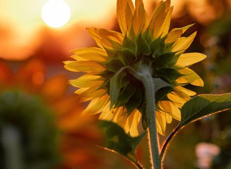 Are Plants Intelligent?