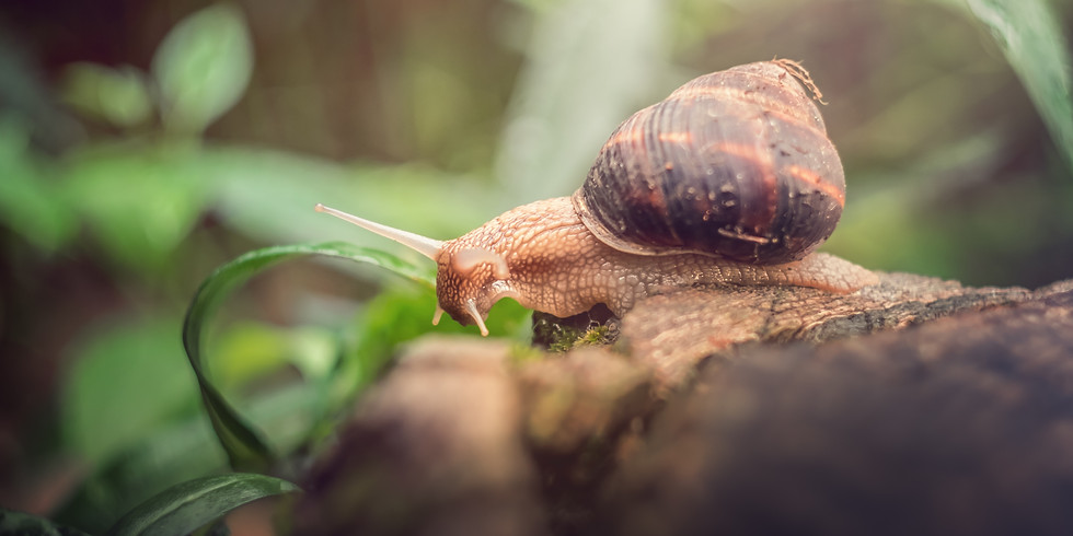 Tiny Living: Fluch oder Segen?   Online   WandelBar 02