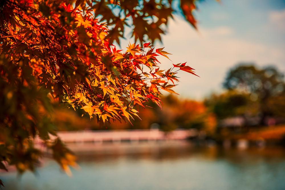 Il fenomeno del foliage e i colori dell'autunno