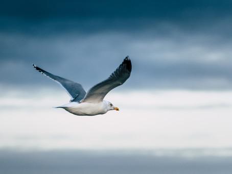 Öykü- Işıl Şenol- Mavi Kanatlıydı Kuşlar