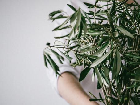 Olive το ανθοίαμα της ομορφιάς