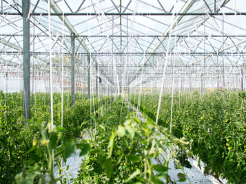 Growers Using Greenhouses Struggle Under High Energy Prices