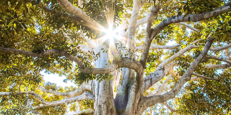 Usui/Holy Fire® Reiki Experience: The Tree of Life - Online and In-Person