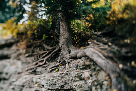 Are your faith ROOTs loosening in these rootless times?