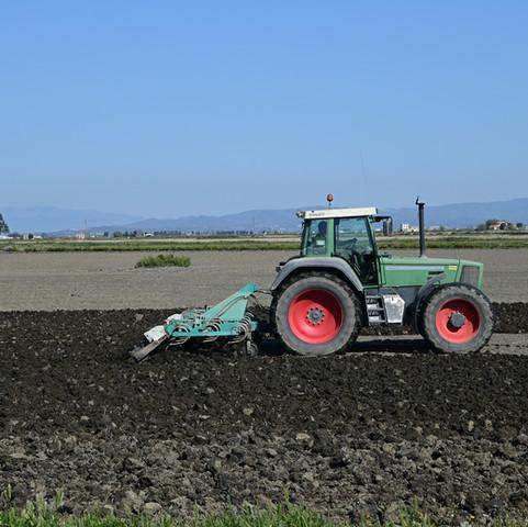 Crecerá 10 por ciento producción de trigo en Sonora en ciclo agrícola Otoño-Invierno 2020-2021