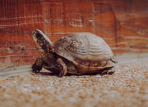 7 ways to slow down.