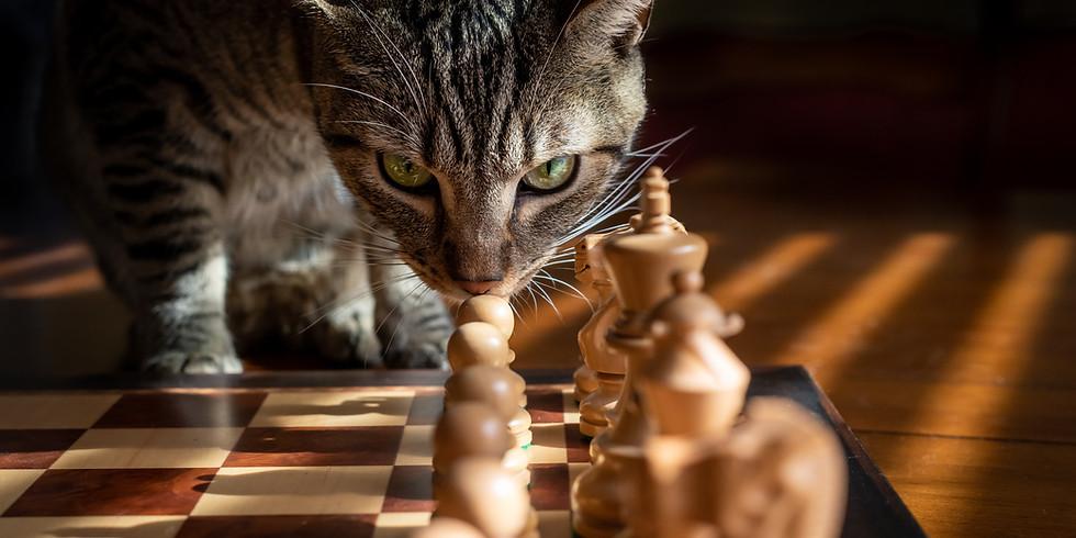 Chessboard Rehearsal