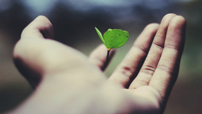 Six steps to sustainable growth
