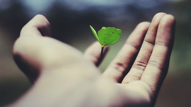 Seedling supported in a hand