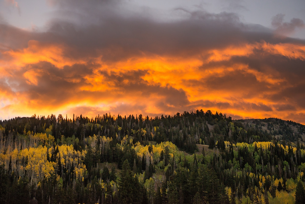 Vivid sunset during fall