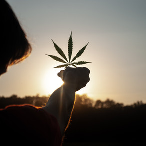 Speak Easy: A Budtenders Guide To Getting The Products You Want.