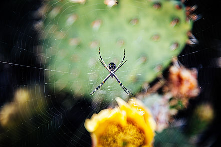 Pest Control in Riverside County