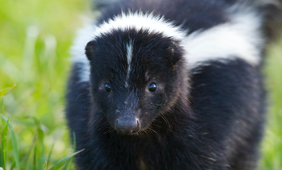 Skunks Can Subtract