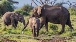 Take a safari of a life time