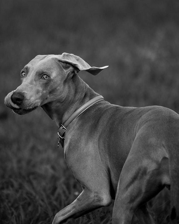 Antiparasitario Canino