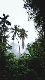 Image by Mukil Menon