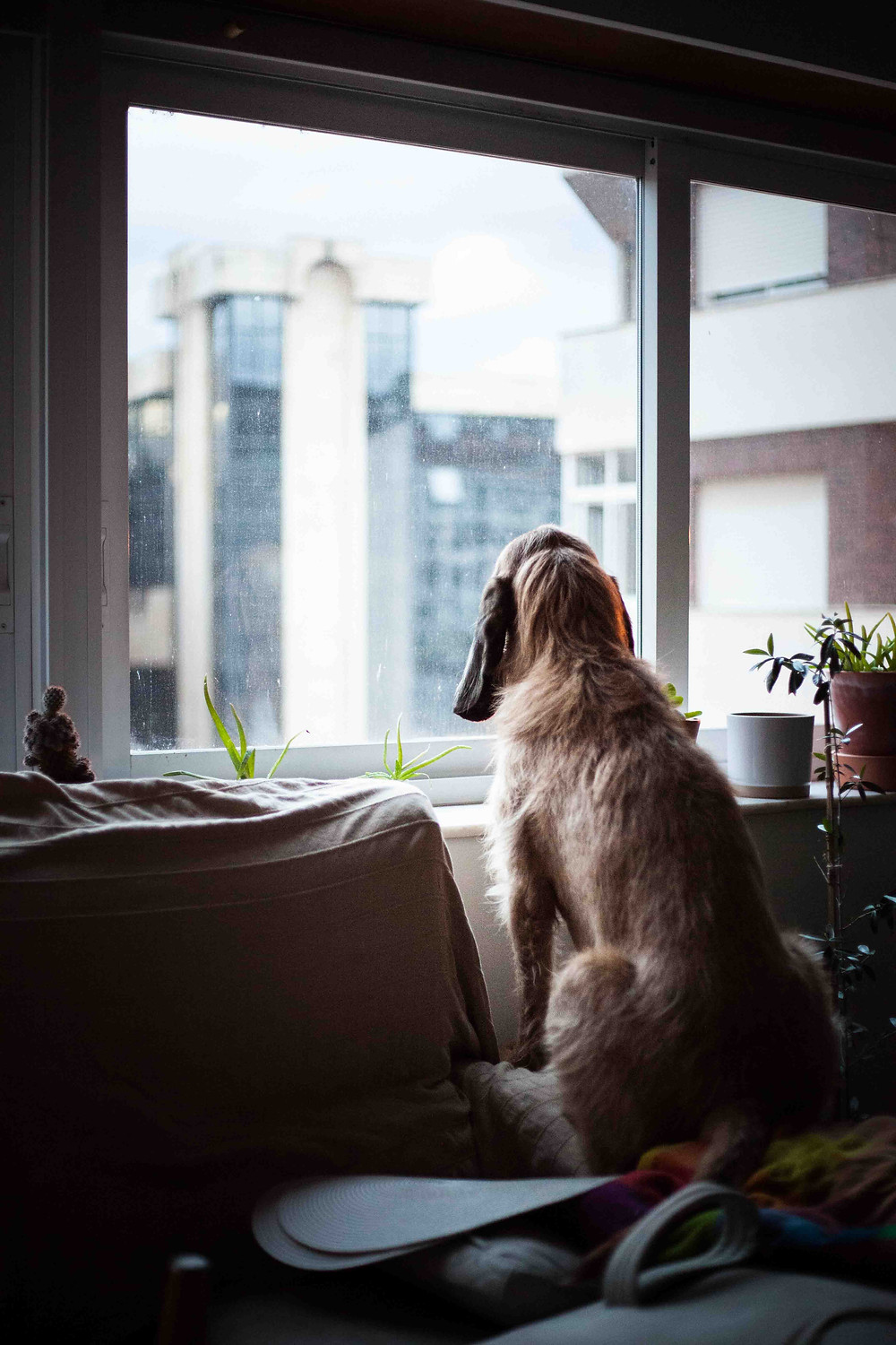 Dog waiting for Mom and Dad