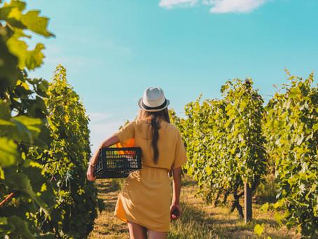 """Il 24% di chi consuma vino è """"bio-fan"""", con forte propensione ad acquistare biologico"""